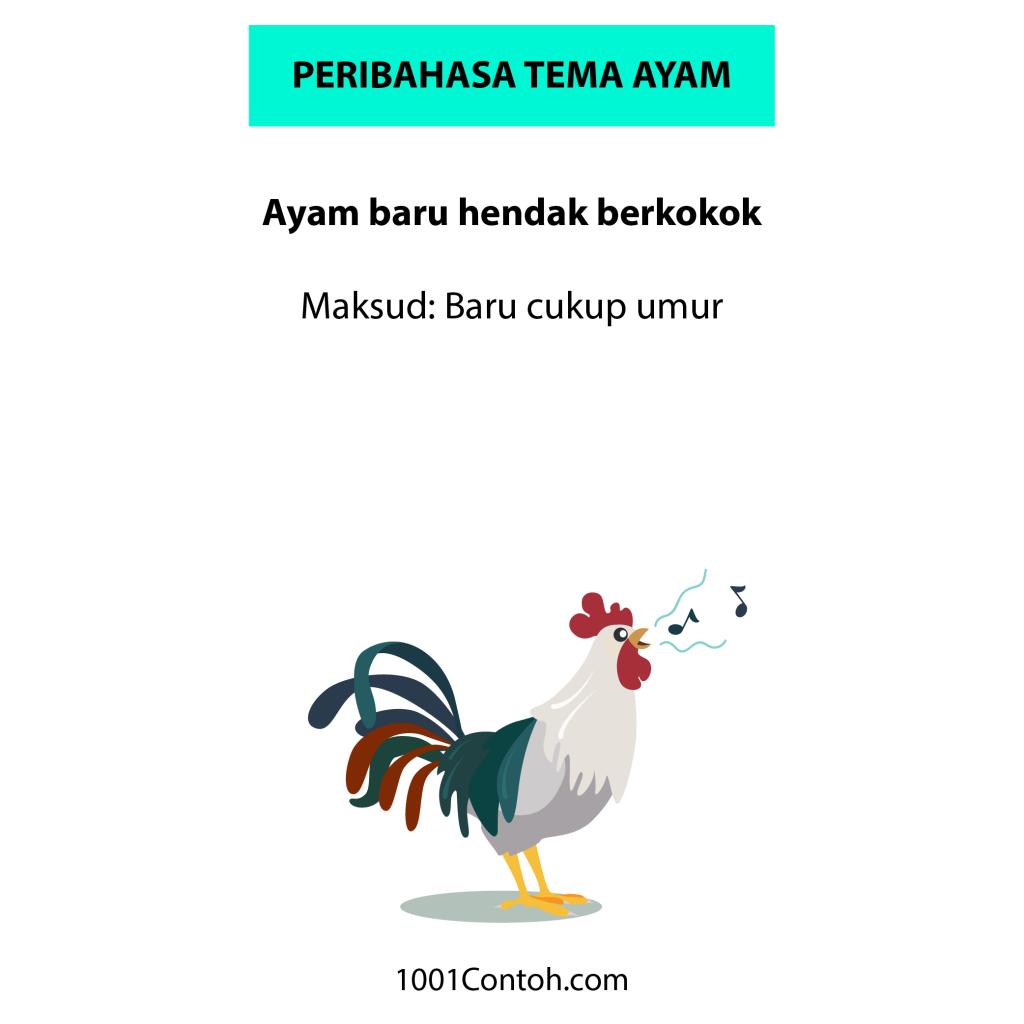 Peribahasa Bergambar: 15 Peribahasa Ayam